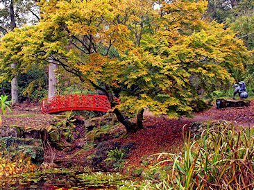... A wild garden with an oriental them ...