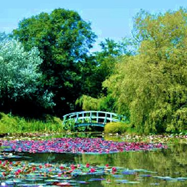 Bennetts Water Garden