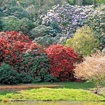 Lydney Park