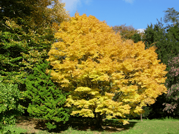 Batsford autumn colour