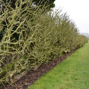 Orchard Espaliers at Waterperry Gardens