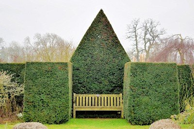 Yew Topiary at Waterperry