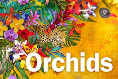 orchids 400