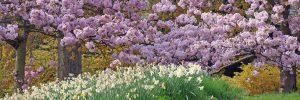 Image of the Month Batsford Arboretum