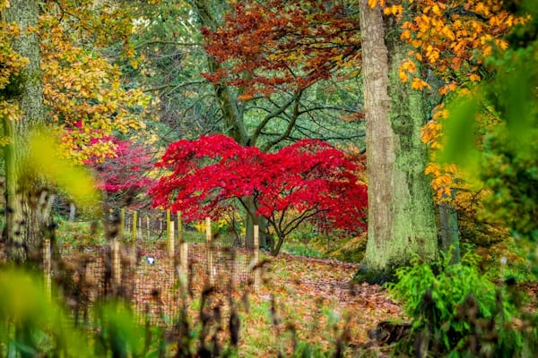 Late Autumn colour at Batsford Arboretum