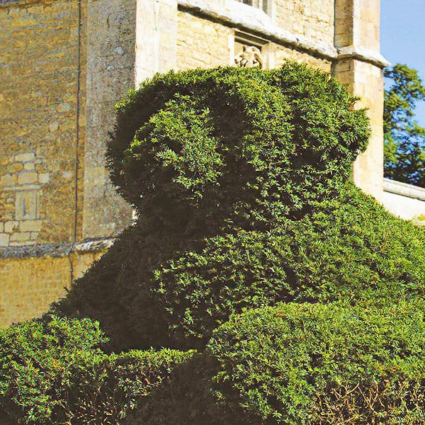 Elton Hall Gardens