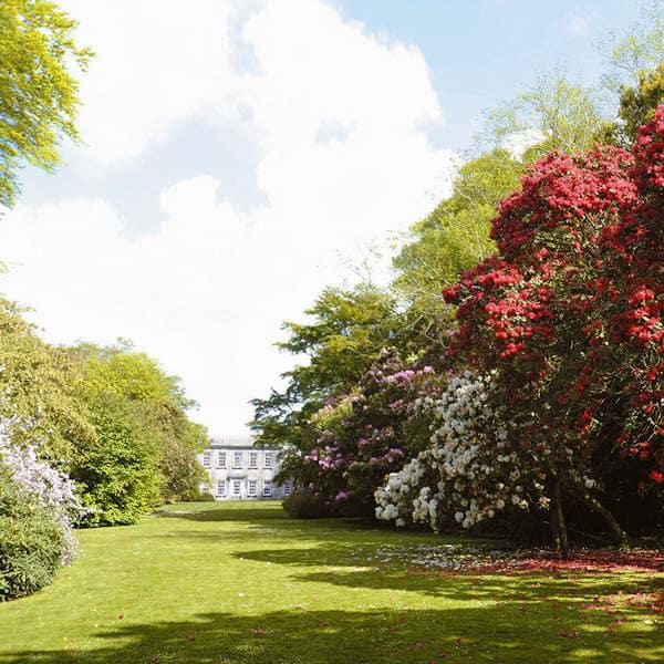 Trewithen Gardens