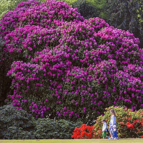Castle Kennedy Gardens