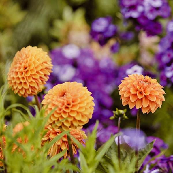 Mount Ephraim Gardens Kent