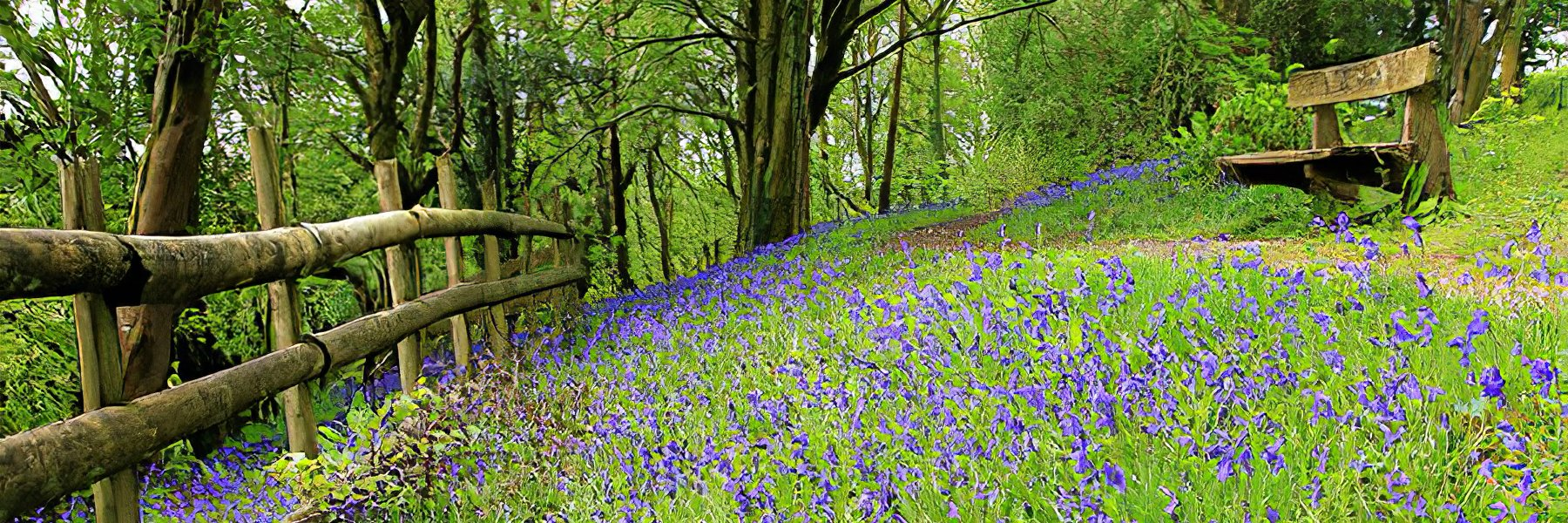 Bluebell Beauty