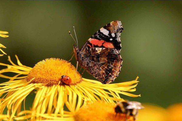 batsford butterfly600 x400