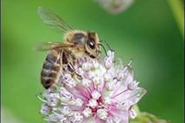 pollinators600x400